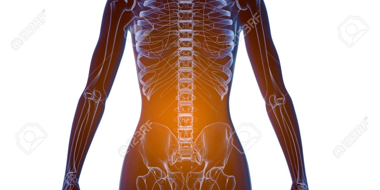 X Ray Human Female Body. Anatomy Concept. 3d Render. Stock Photo ...