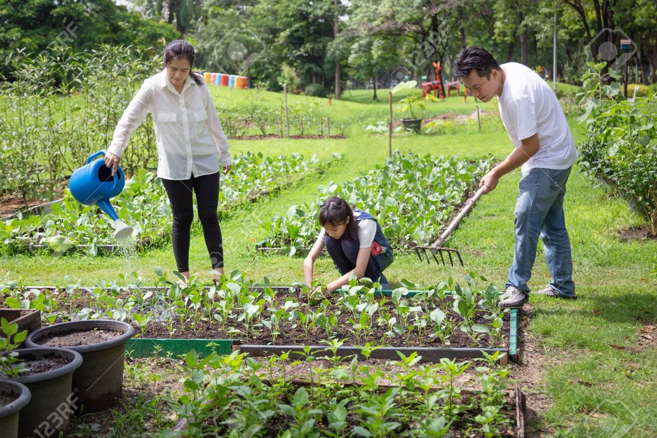 Happy asian family,parents help,care,daughter to grow vegetables in farm,father working using rake in organic garden,mother watering plants with watering can,vegetables gardening,agriculture,activites concept - 130470653