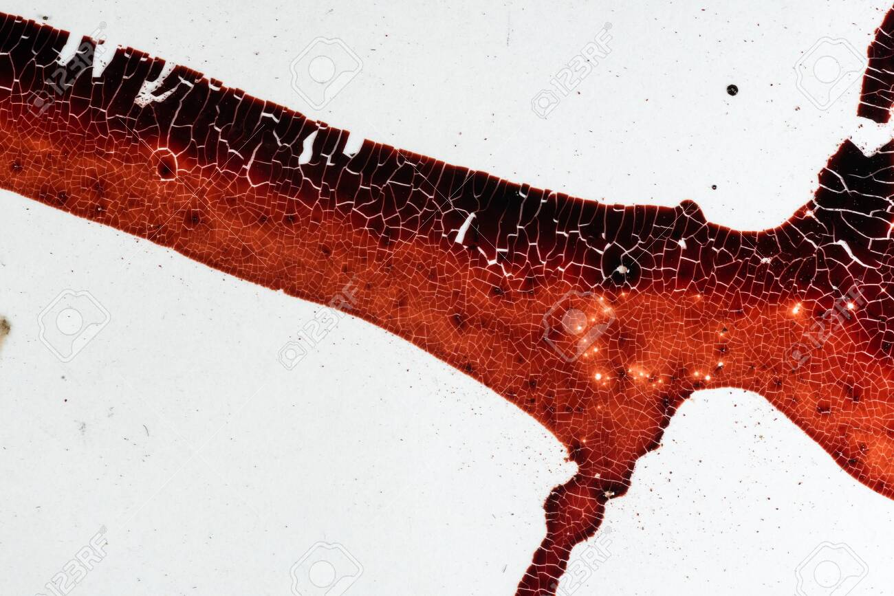 Drops of blood on a white background - 127893445