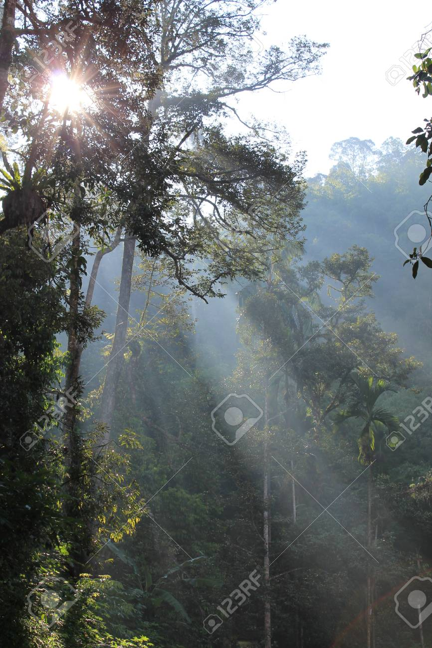 Morning Light >> Morning Light In Jungle Tropicana Stock Photo Picture And Royalty