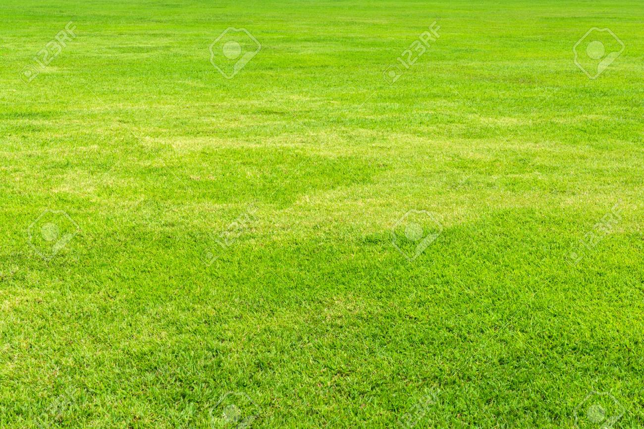 Green grass background Stock Photo - 21749923