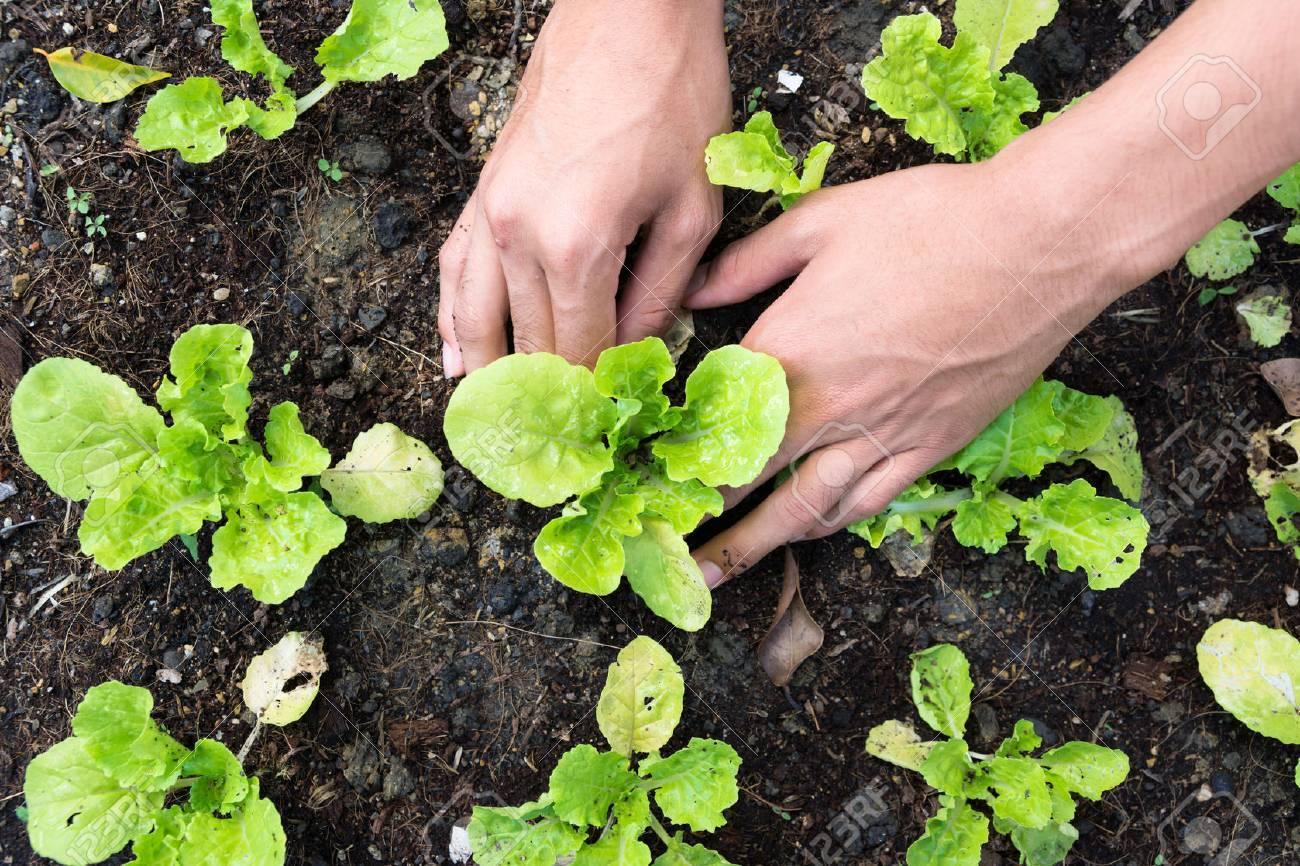 Planting vegetable garden - 25799291