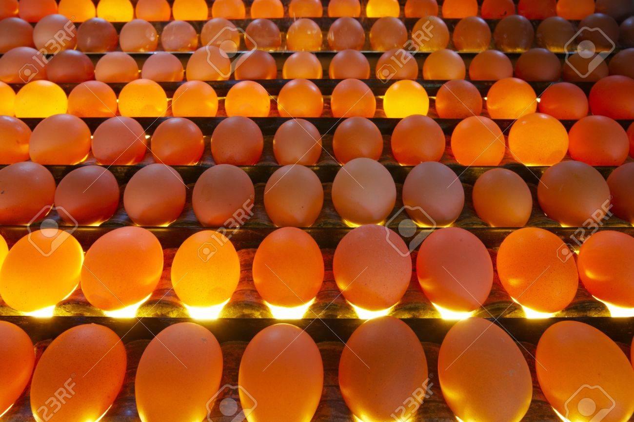 Immagini stock uova in qualità di illuminazione di controllo in