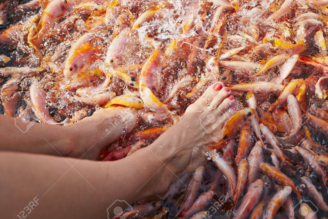 Feet massage by fishes in the river. Stock Photo - 26961469