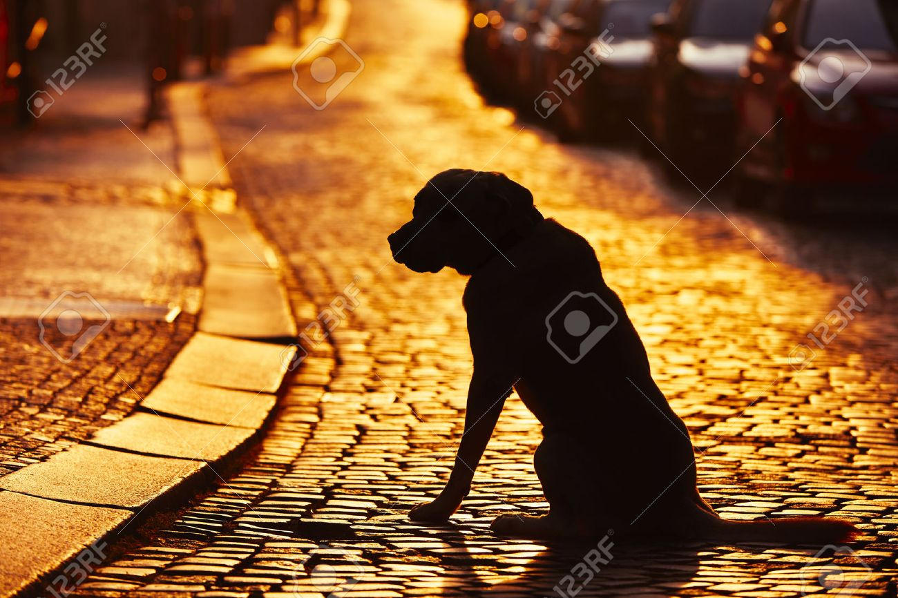 Silhouette of the dog on the street at sunset. Standard-Bild - 45286174