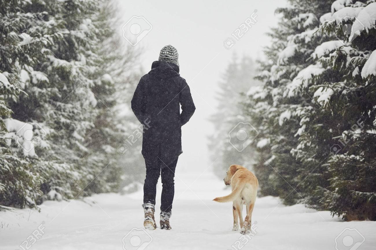 Man walking with his yellow labrador retriever in winter landscape Standard-Bild - 48801823