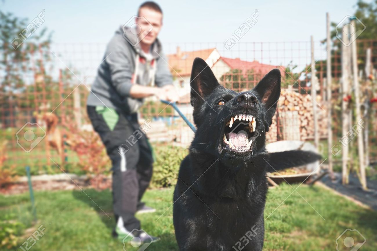 Aggressive dog is barking. Young man with angry black dog on the leash. Standard-Bild - 64857628