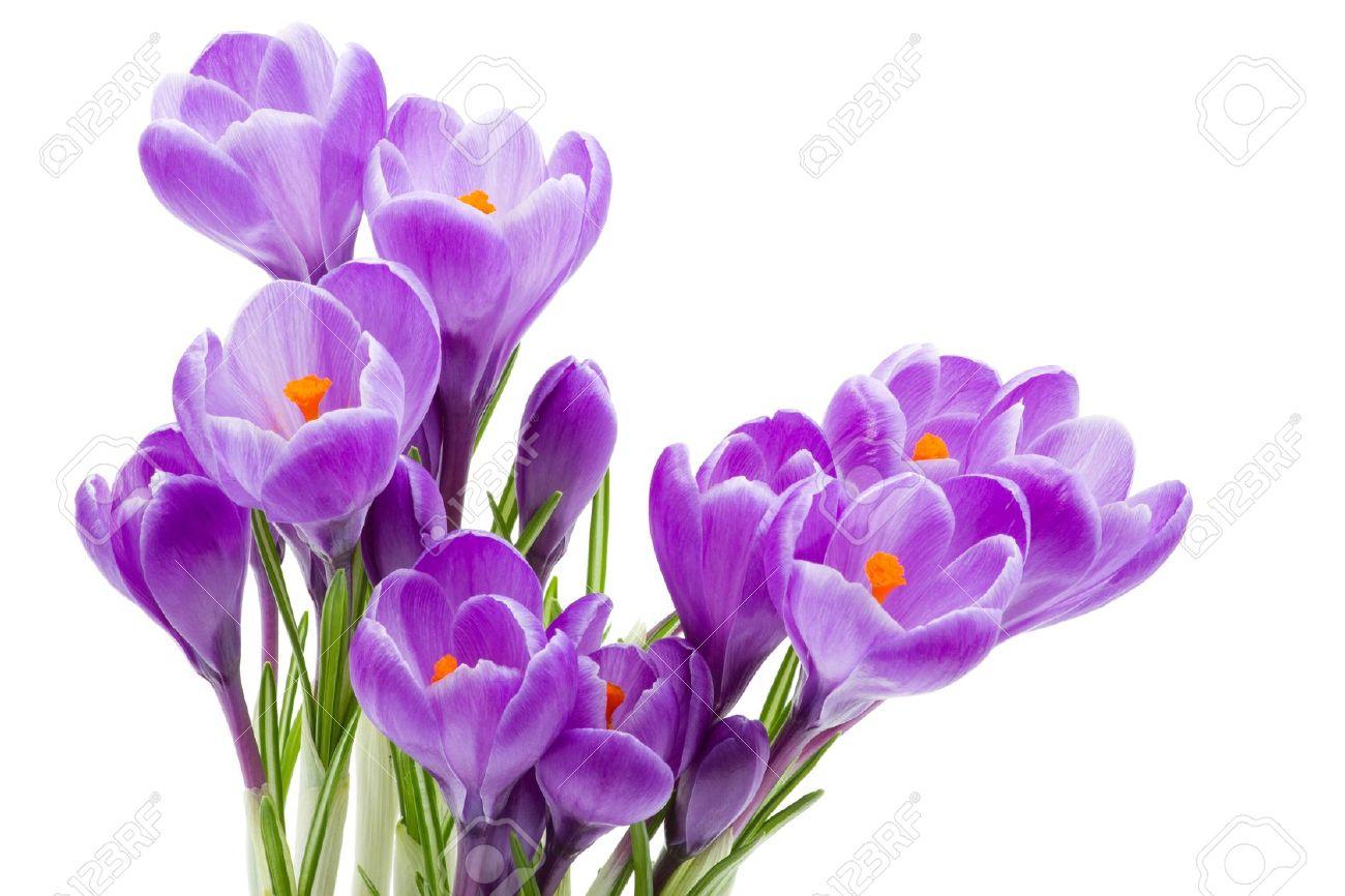 цветок на белом фоне картинка