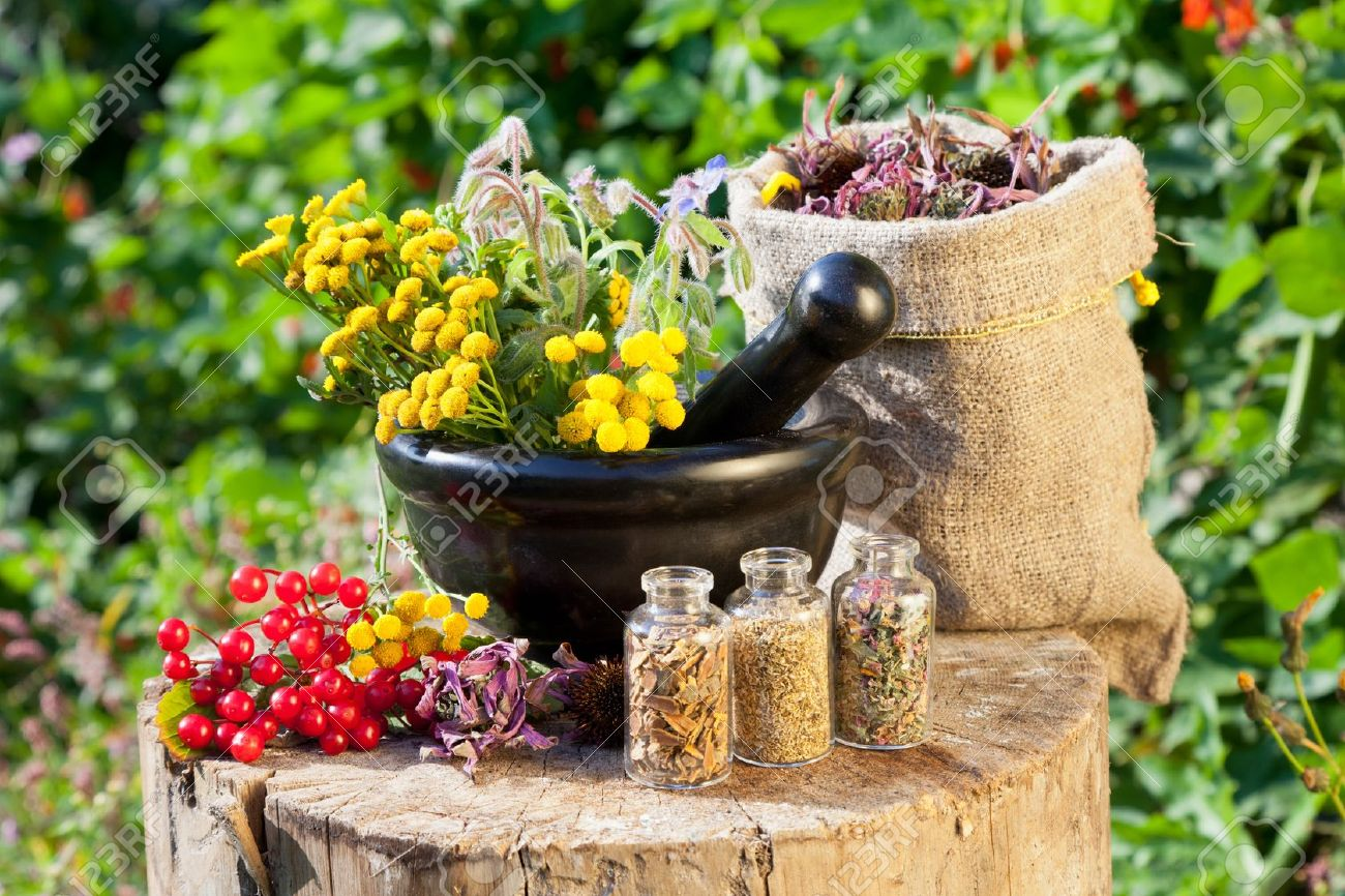 Image result for herbs and healing