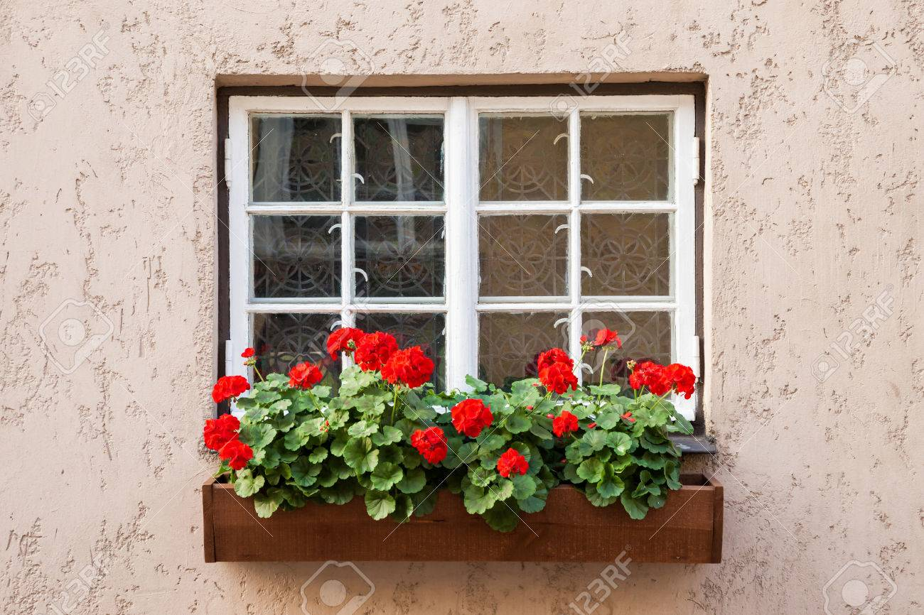 Window decorated with Geranium flowers - 52536490
