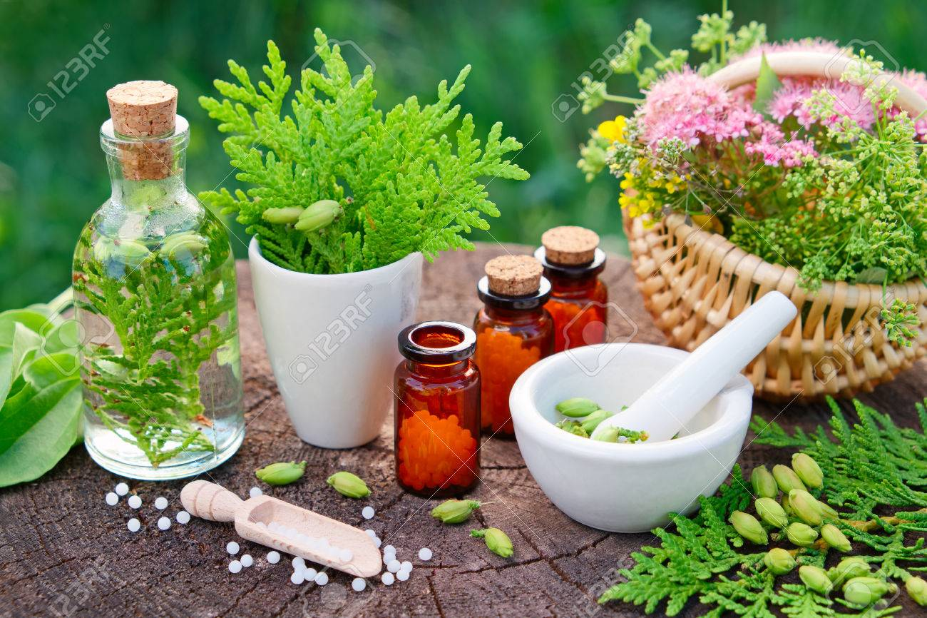 Bottles of homeopathic globules. Thuja, Plantain, healthy infusion, mortar and basket of herbs. Homeopathy medicine. - 81380162