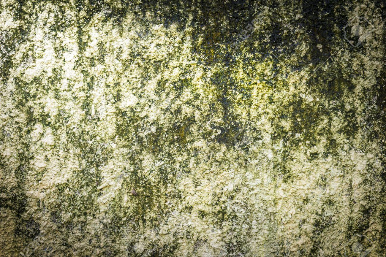 Fancy Wall Moss Art Sketch - Art & Wall Decor - hecatalog.info