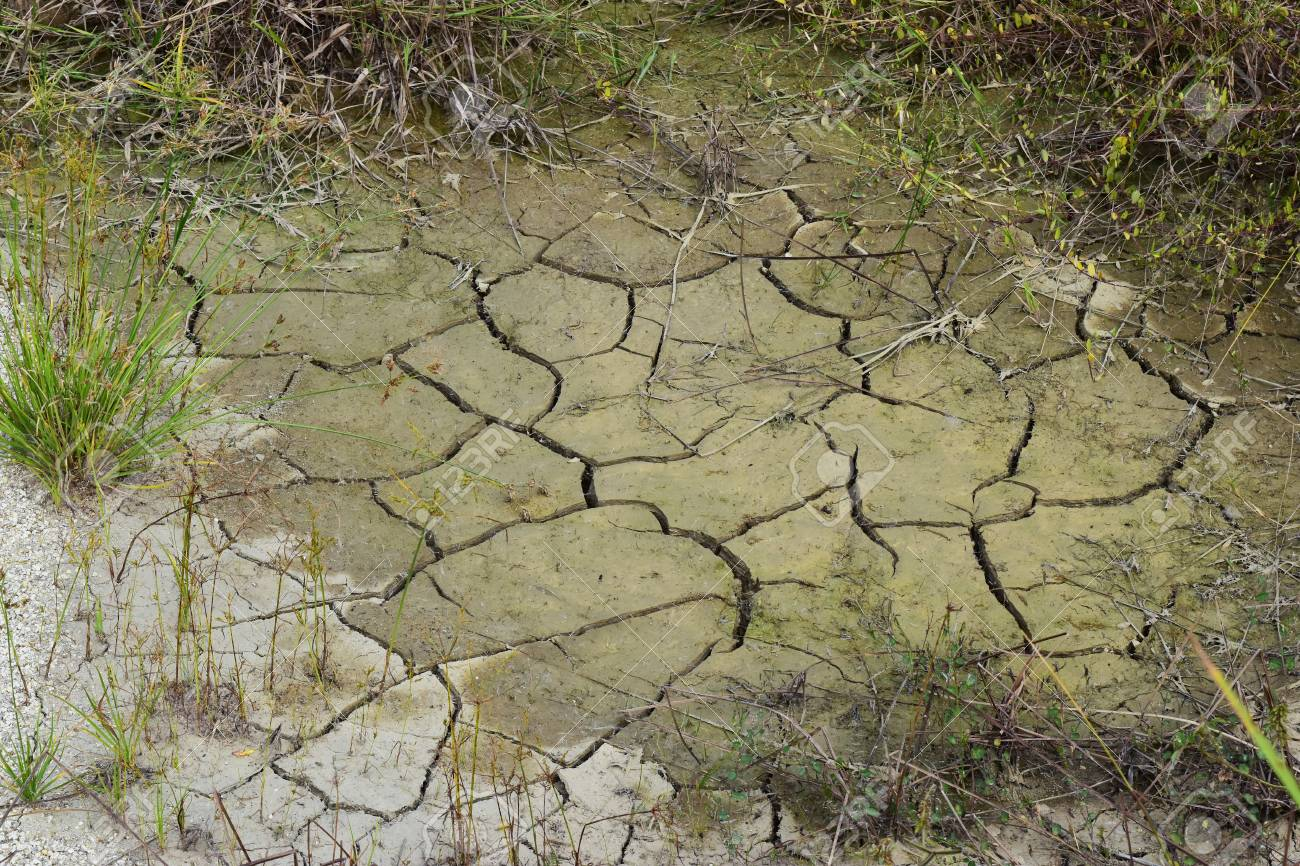 95854705-the-ground-in-dry-swamp-cracked-surrounded-by-plants-trying-to-find-water-%C2%A0temperature-heat-and-it-d.jpg