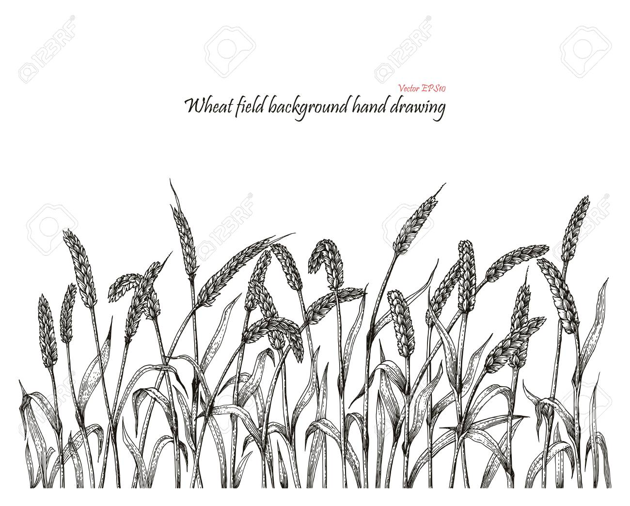 Wheat Field Background Hand Drawing Royalty Free Cliparts Vectors