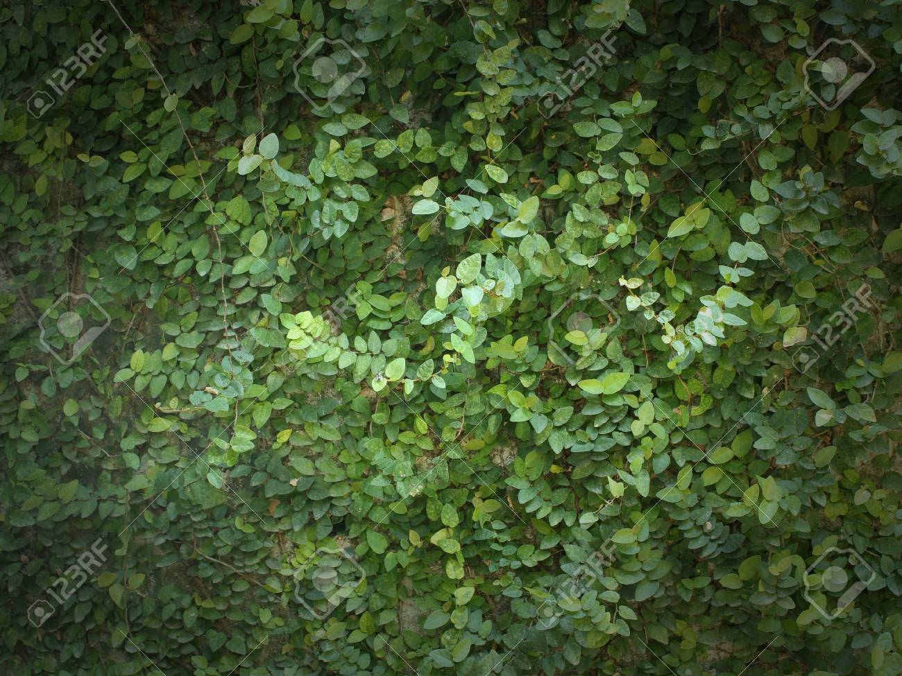 green leaves background Stock Photo - 15150255