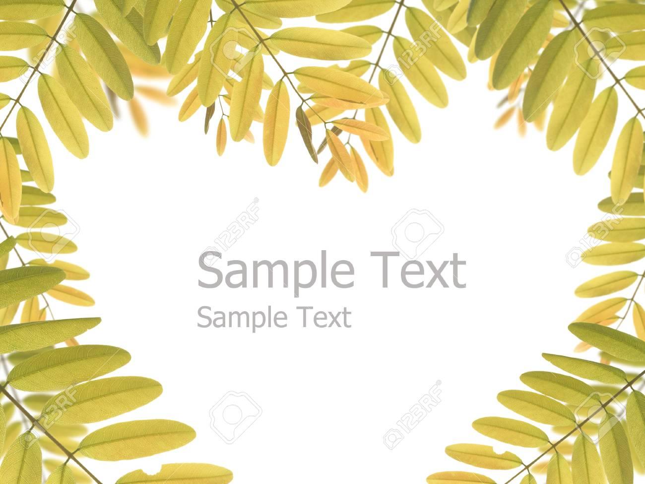 Green leaf background Stock Photo - 15150233