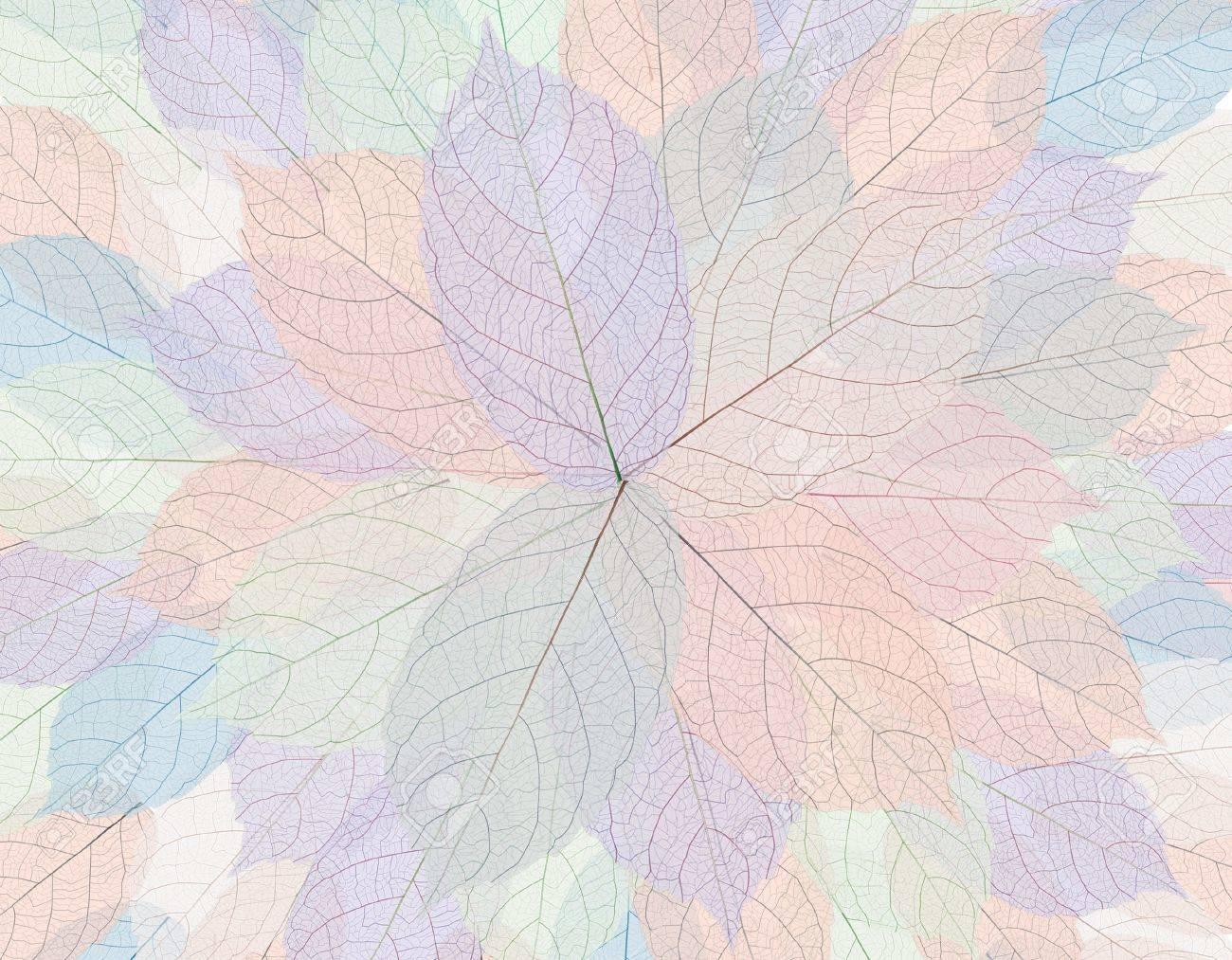 Skeleton leaf Stock Photo - 15150262