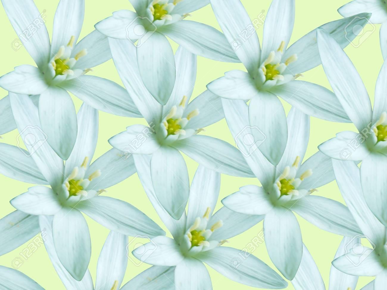 white lily texture Stock Photo - 6674921