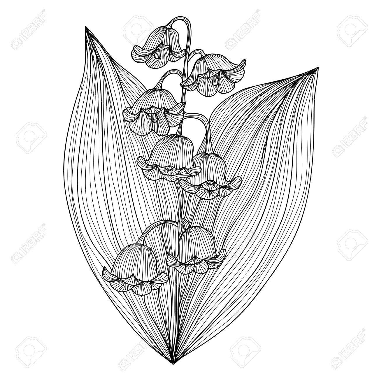 Elegant Decorative Lily Od The Valley Flowers, Design Element ...