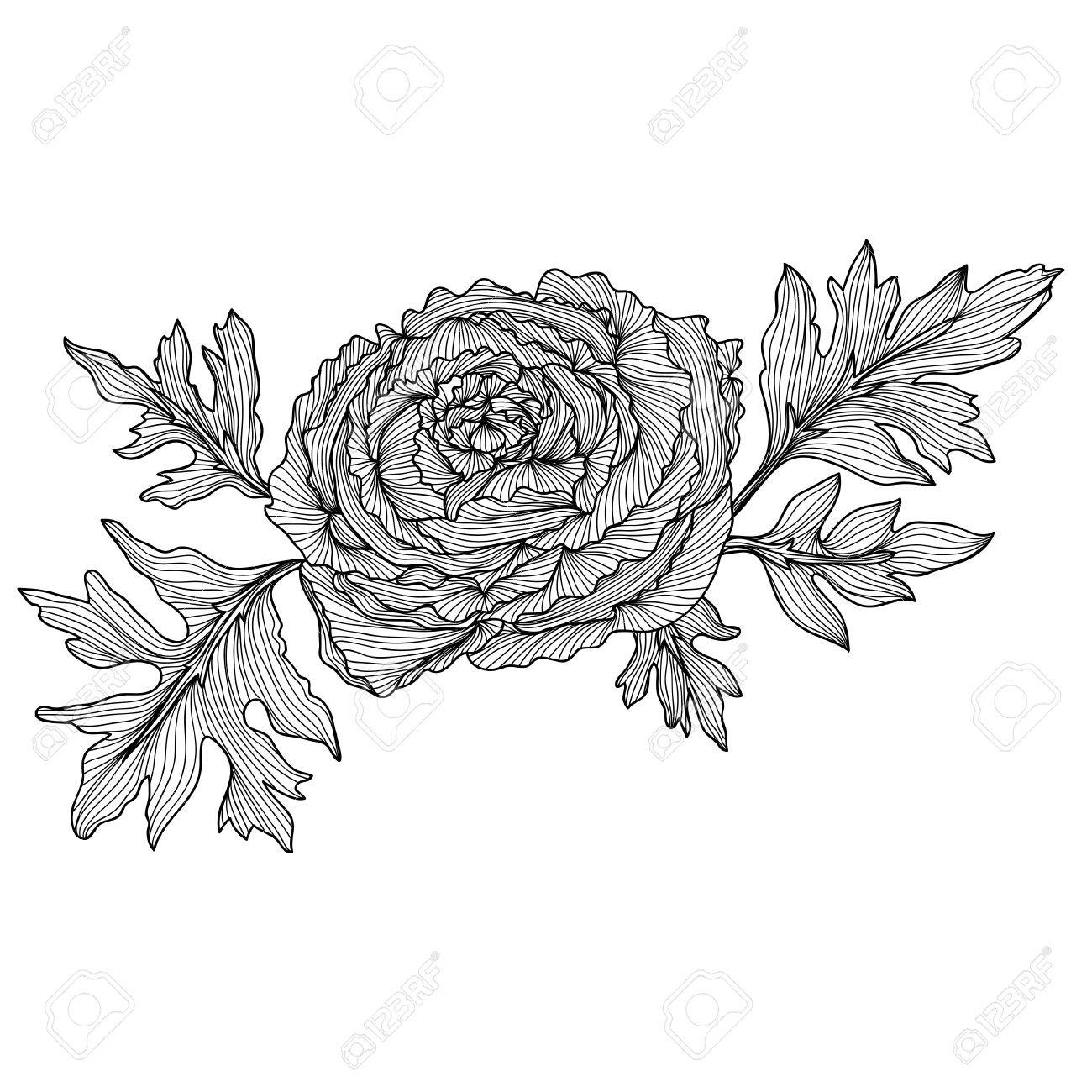 Floral Decoration elegant decorative ranunculus flowers, design element. floral