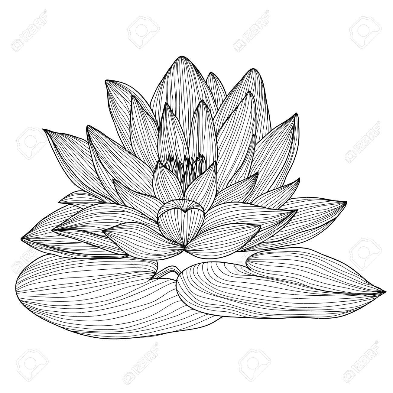 Elegant decorative lotus flower design element floral branch elegant decorative lotus flower design element floral branch floral decoration for vintage wedding izmirmasajfo