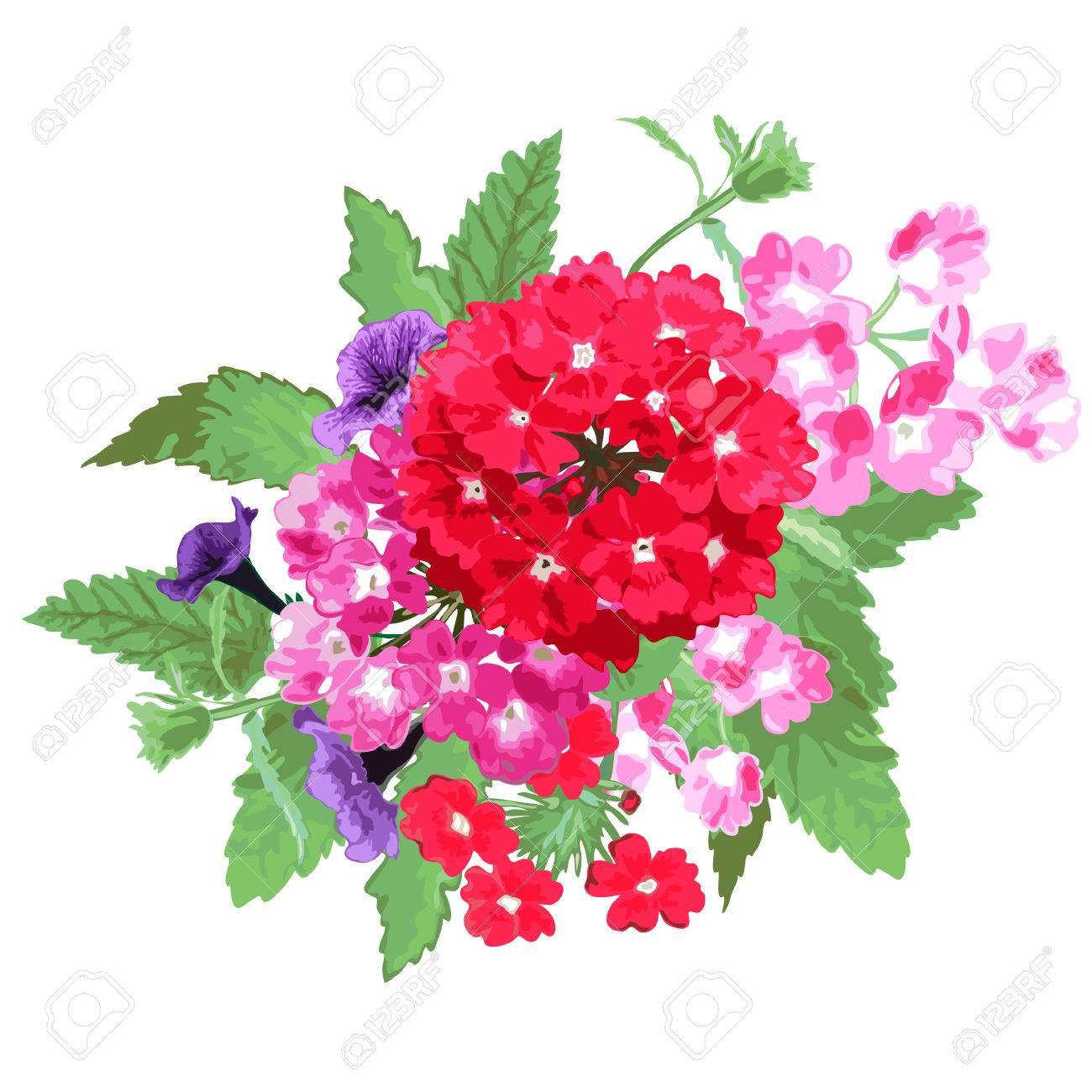 Elegant Bouquet With Verbena And Petunia Flowers, Design Element ...