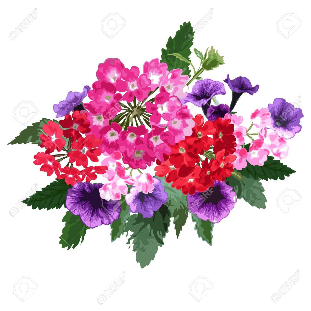 Aroma Elegante Con Verbena Y Petunia Flores, Elemento De Diseño ...