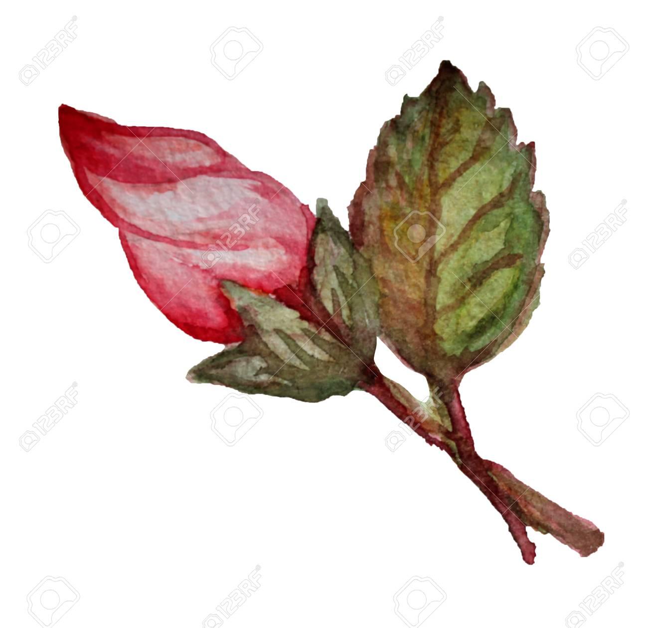 Decorative Watercolor Hibiscus Flower Clipart Design Element