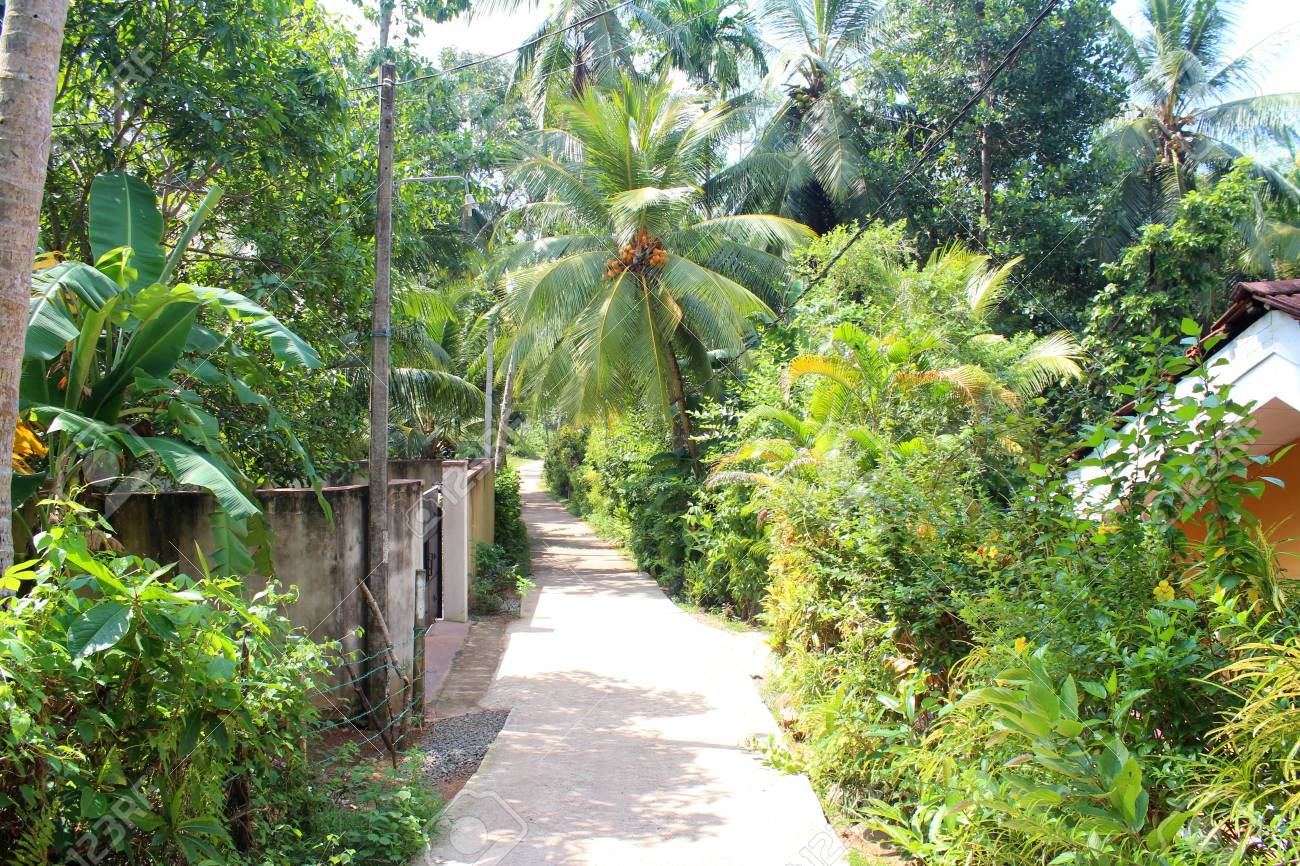 Road In Beautiful Green Jungle With Palm Trees Green Plants Stock