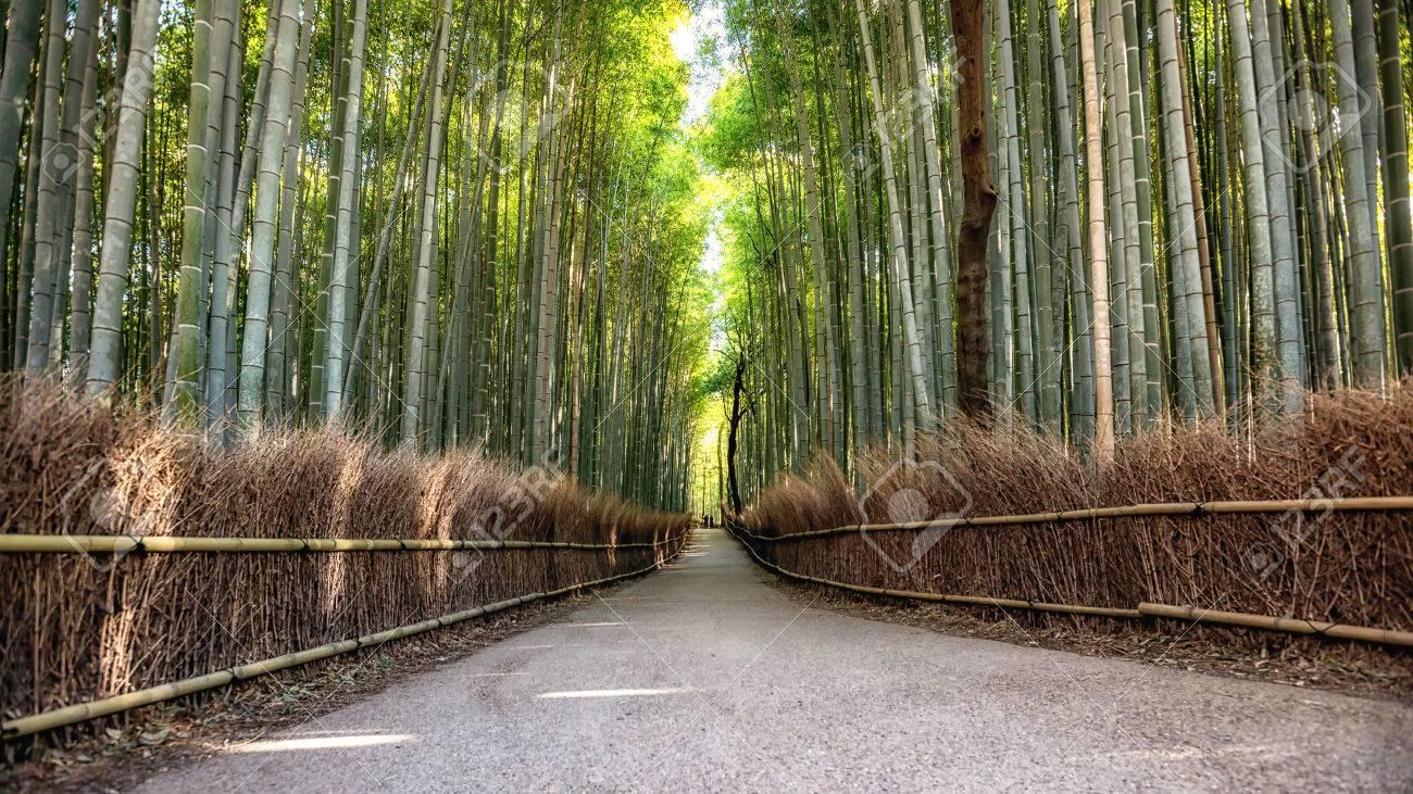 Weg Zum Bambuswald Arashiyama Kyoto Japana Lizenzfreie Fotos