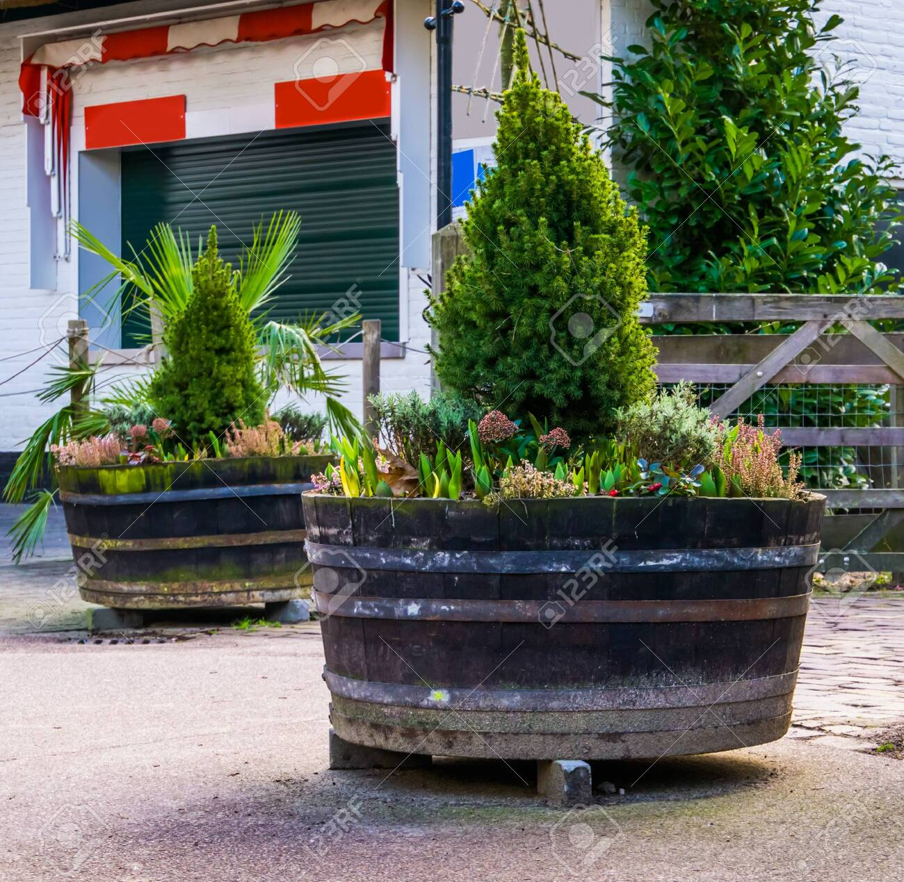 Wooden Tubs Filled With Plants And Flowers Garden And Outdoor