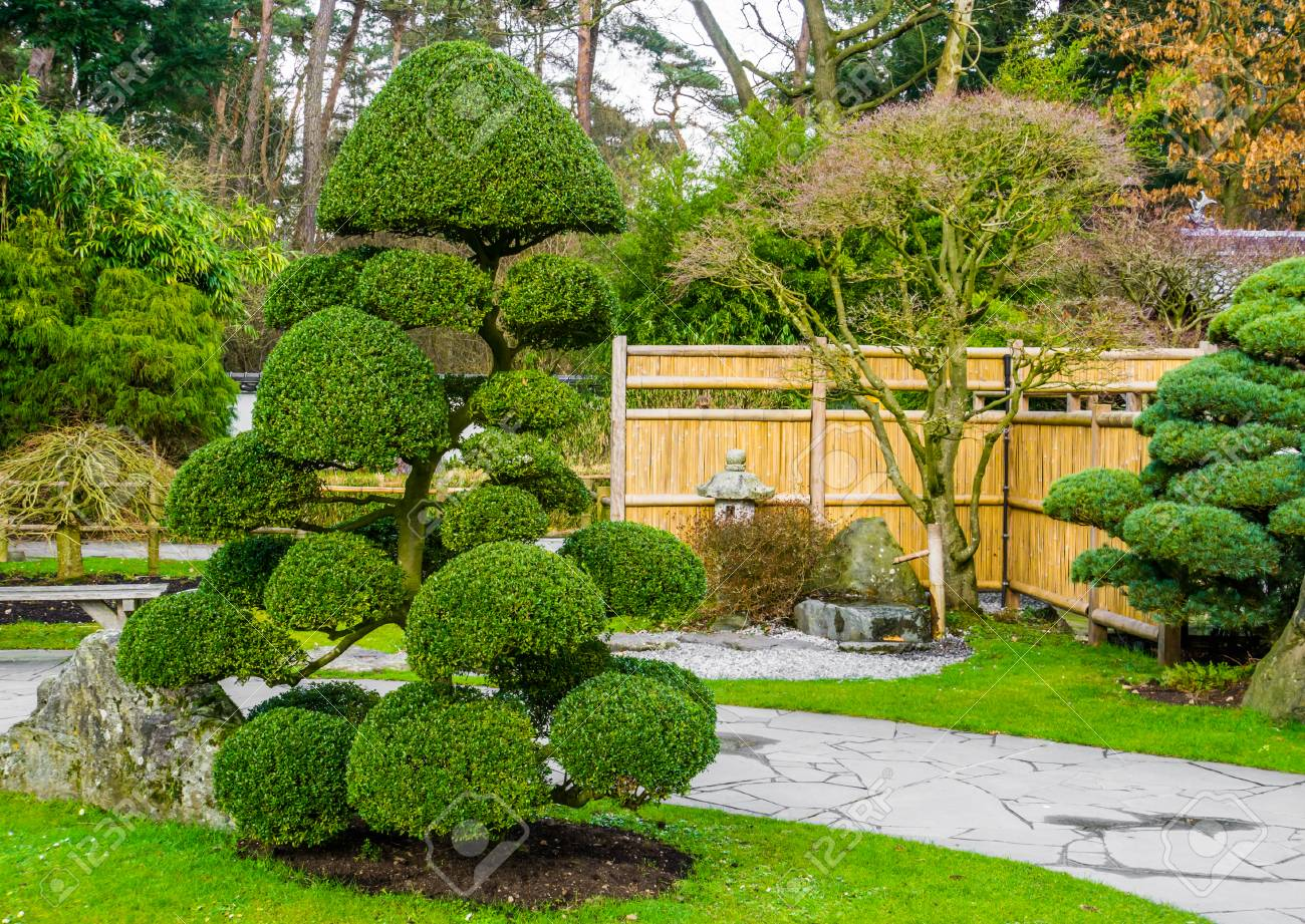 Beautiful Pruned Tree In A Japanese Garden Topiary Art Forms