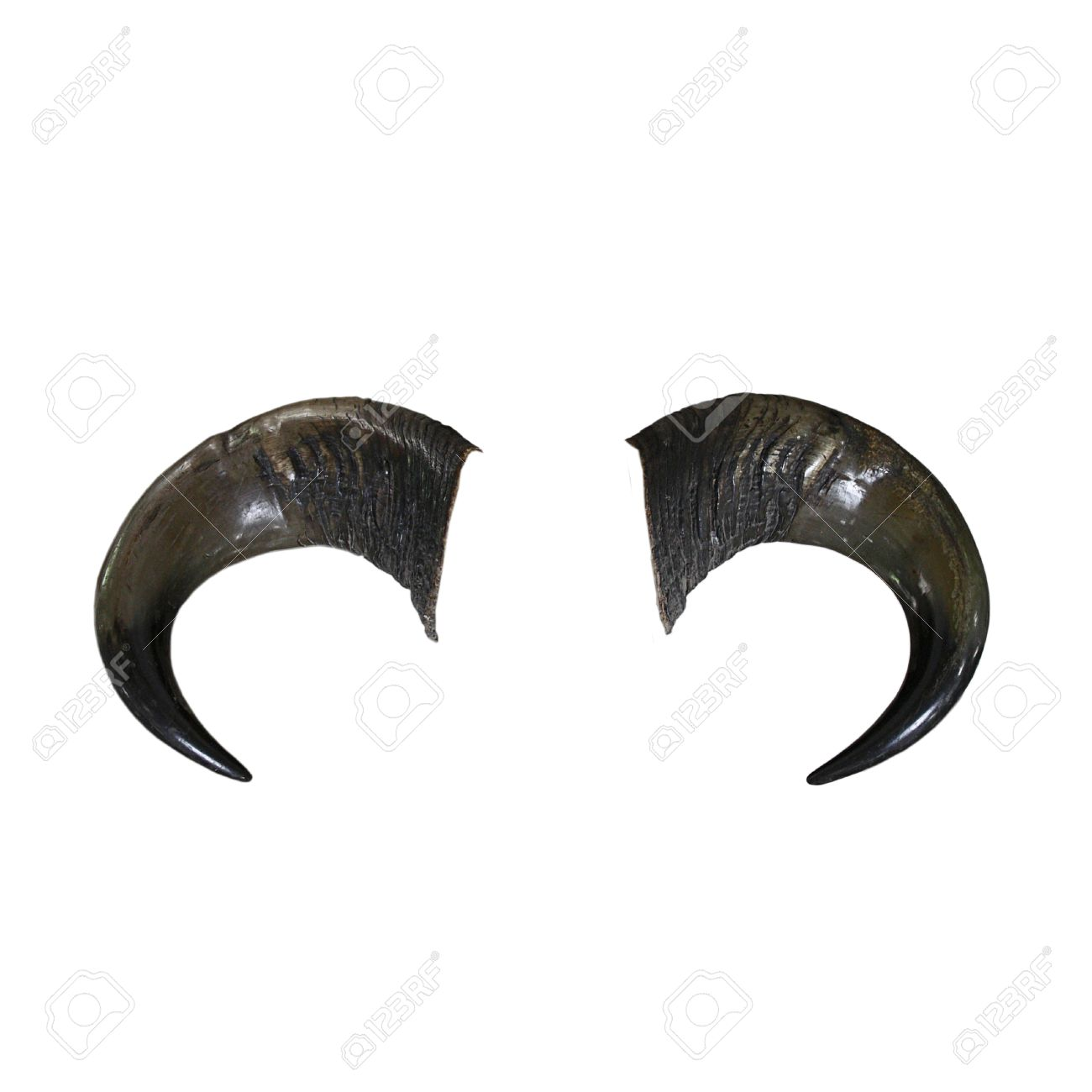 Bull Horns Stock Photo, Picture And Royalty Free Image. Image ...