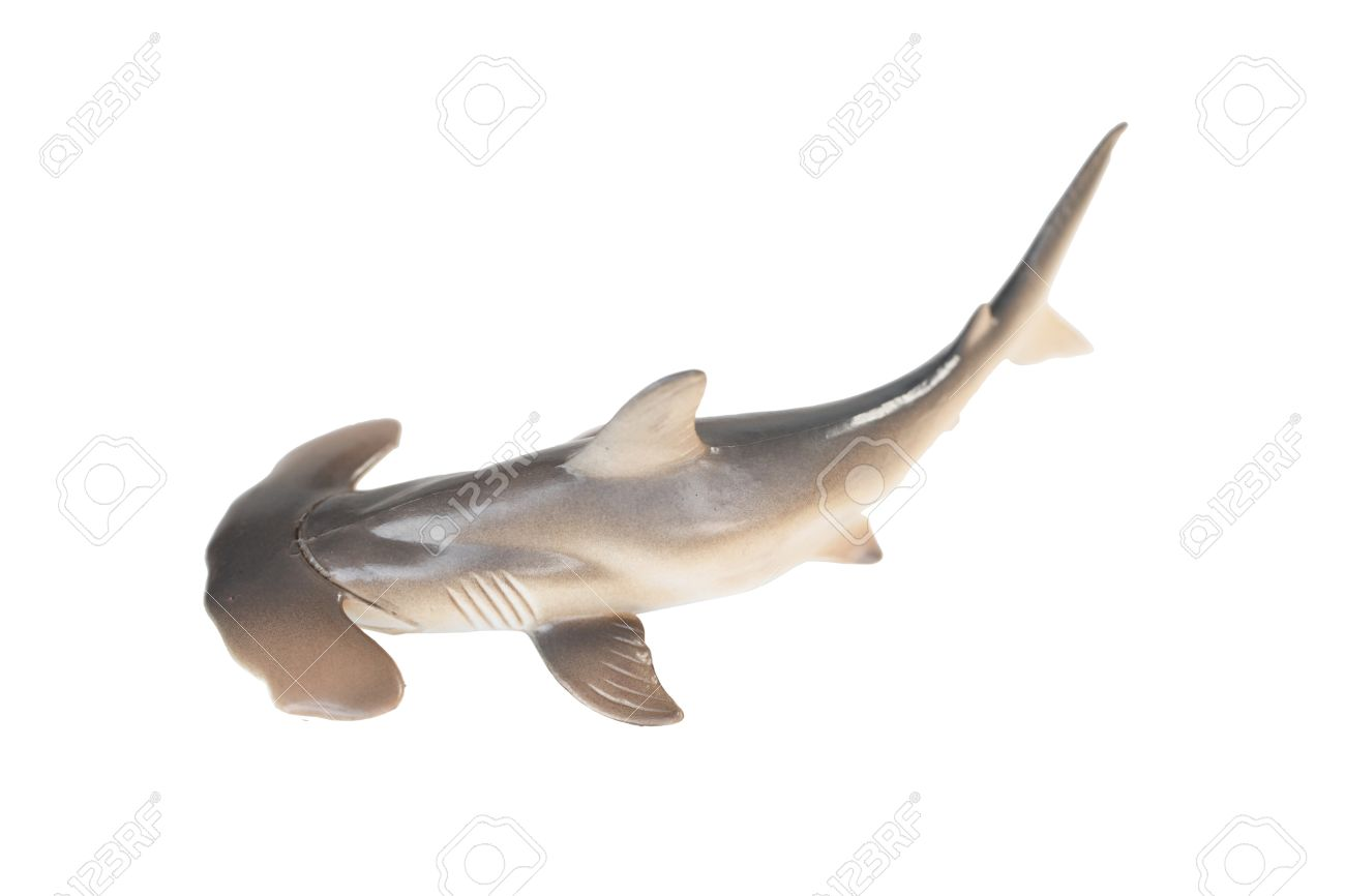 plastic hammerhead shark toy isolated on white background stock