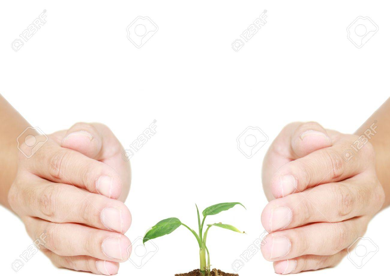 isolated hand protecting plant for eco system Stock Photo - 19297803