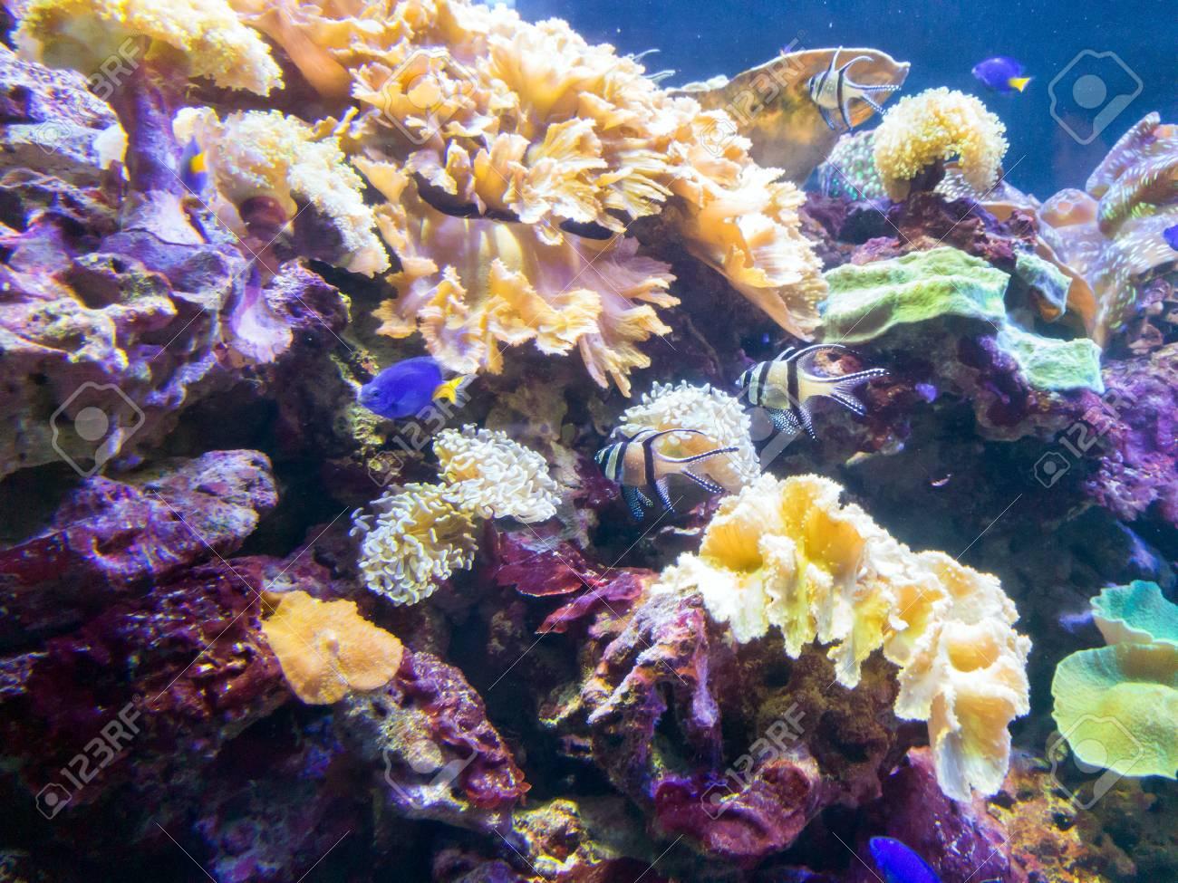 Exotic Saltwater Fish Swimming In A Big Aquarium Tropical Ocean
