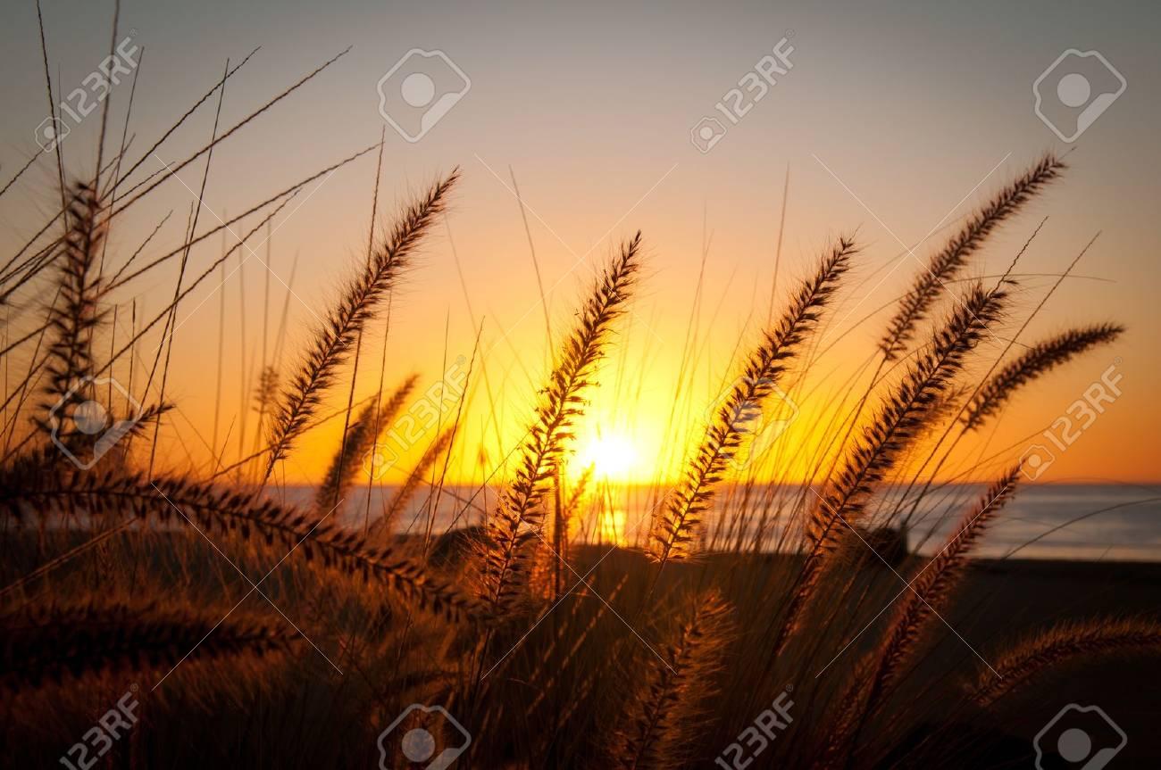 Tall Grassy Sunrise in Mexico Stock Photo - 9695487