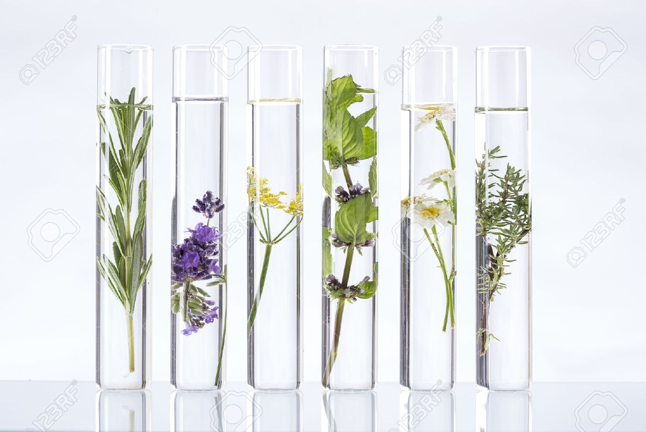 Image result for aromatherapy plants