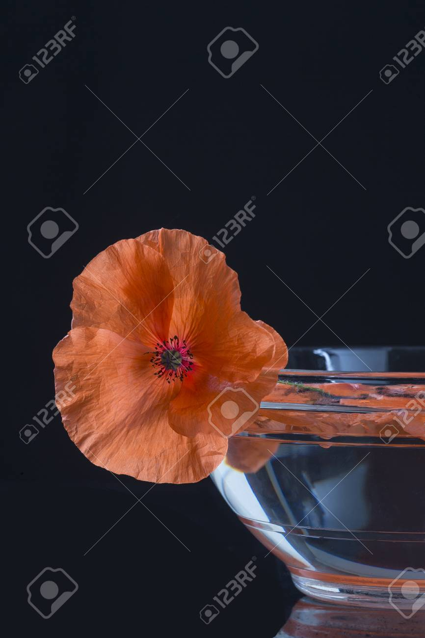 Poppy In Glass Cup Herbal Tea Preparation Stock Photo Picture And