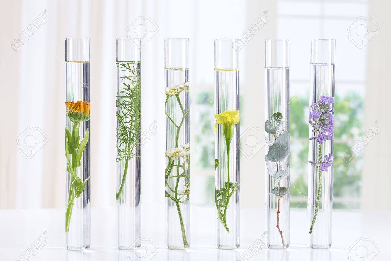 Scientific Experiment - Flowers and plants in test tubes - 66533858