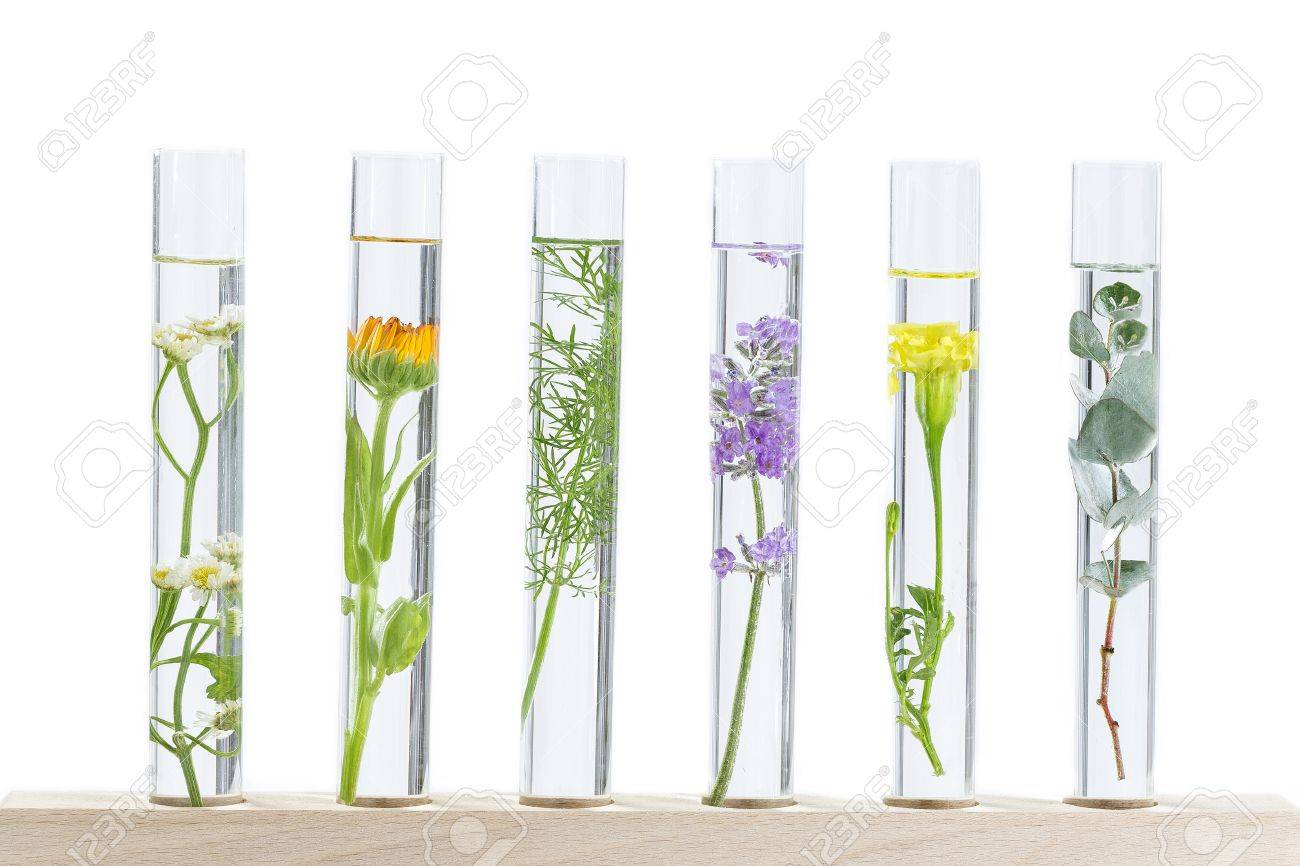 Scientific Experiment - Flowers and plants in test tubes - 66549705