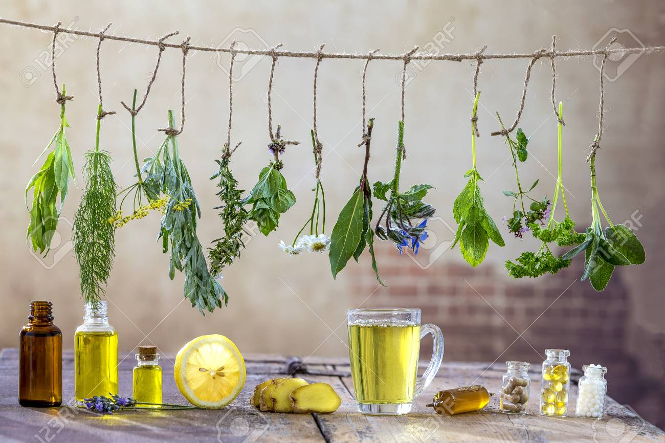 Border with Various fresh herbs and herbal tea on white fresh medicinal plants hanging on the top . Preparing medicinal plants for phytotherapy and health promotion, - 88275164