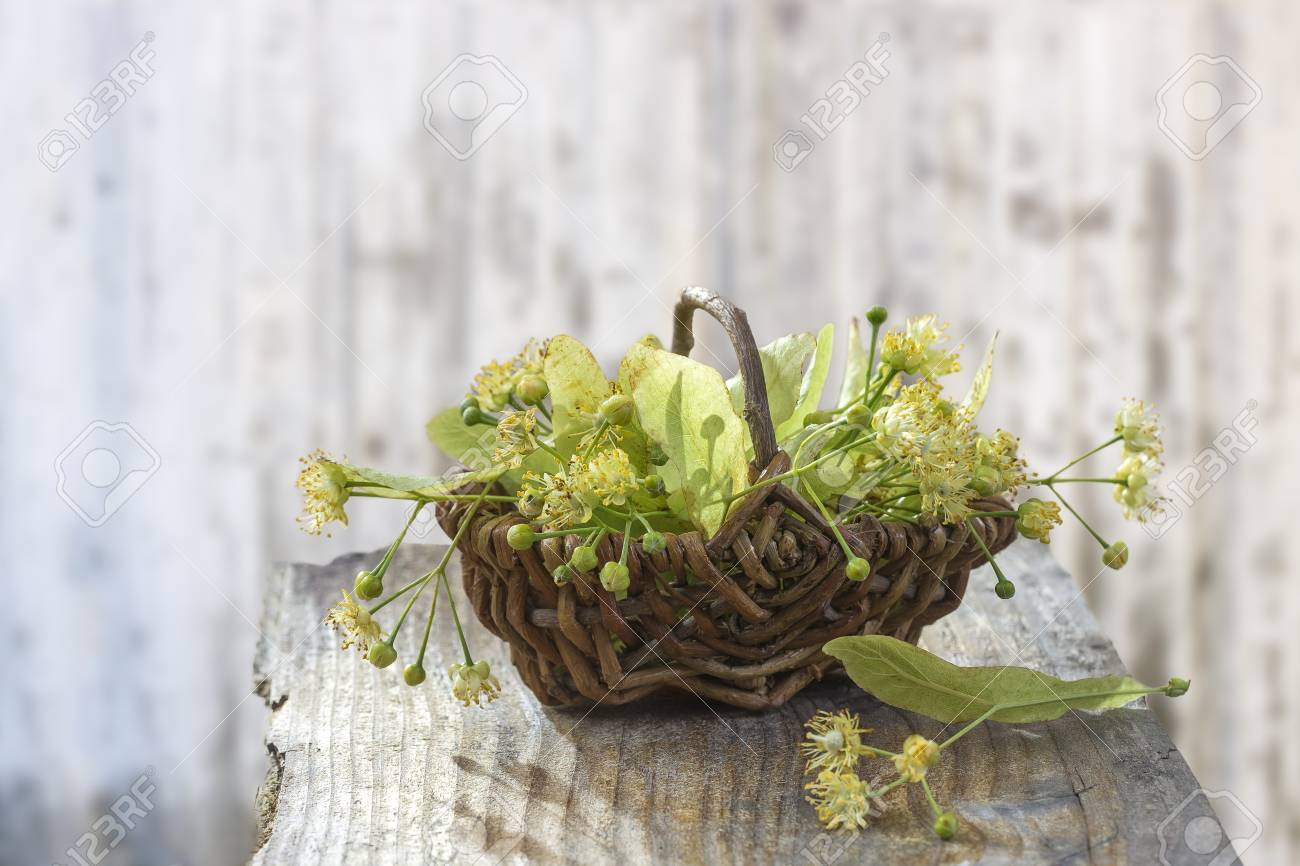 wicker basket with linden flowers on grey wooden table on an old blur wall white background - 104428633