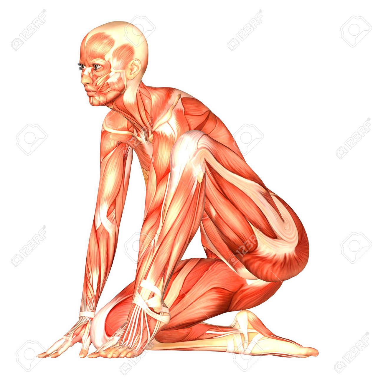 Großartig Anatomie Eines Weiblichen Körpers Bilder - Menschliche ...