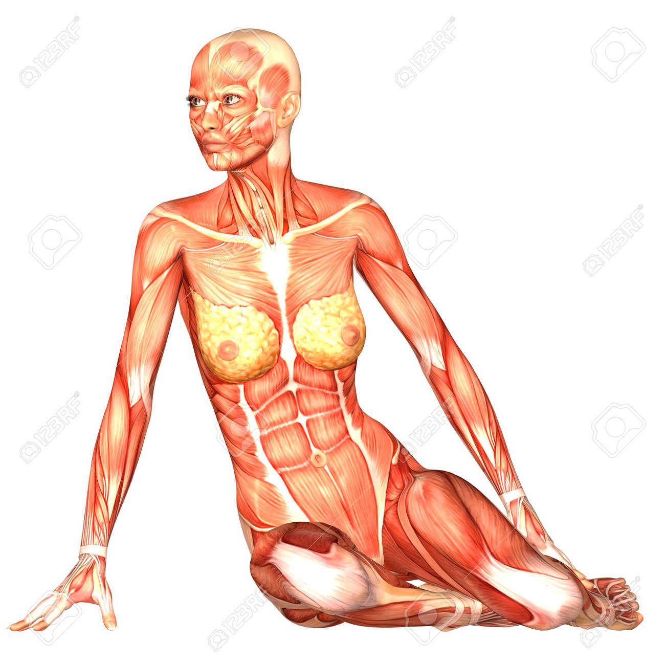 Ilustración De La Anatomía Del Cuerpo Humano Femenino Aislado En Un ...