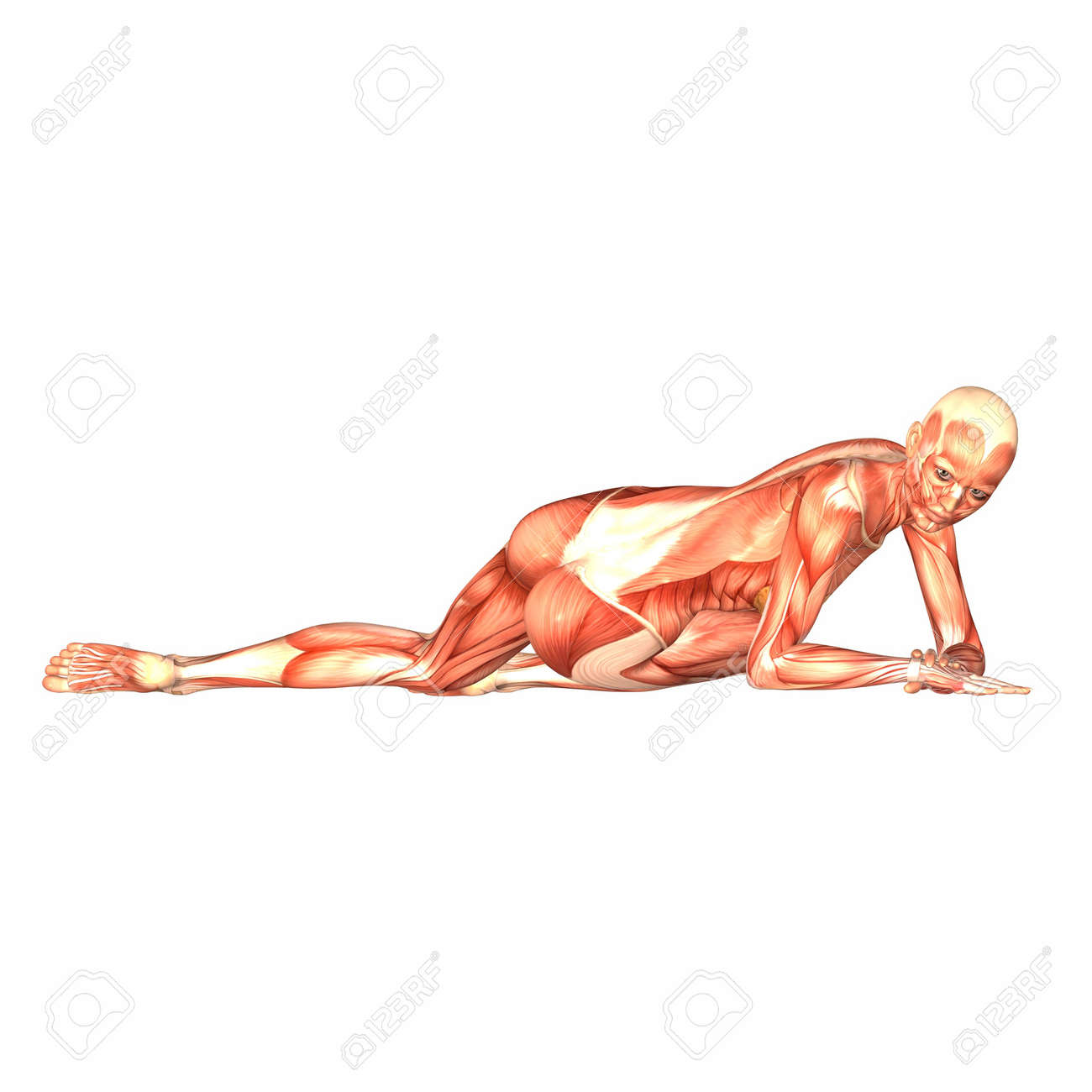 Illustration of the anatomy of the female human body isolated on a white background Stock Illustration - 12743296