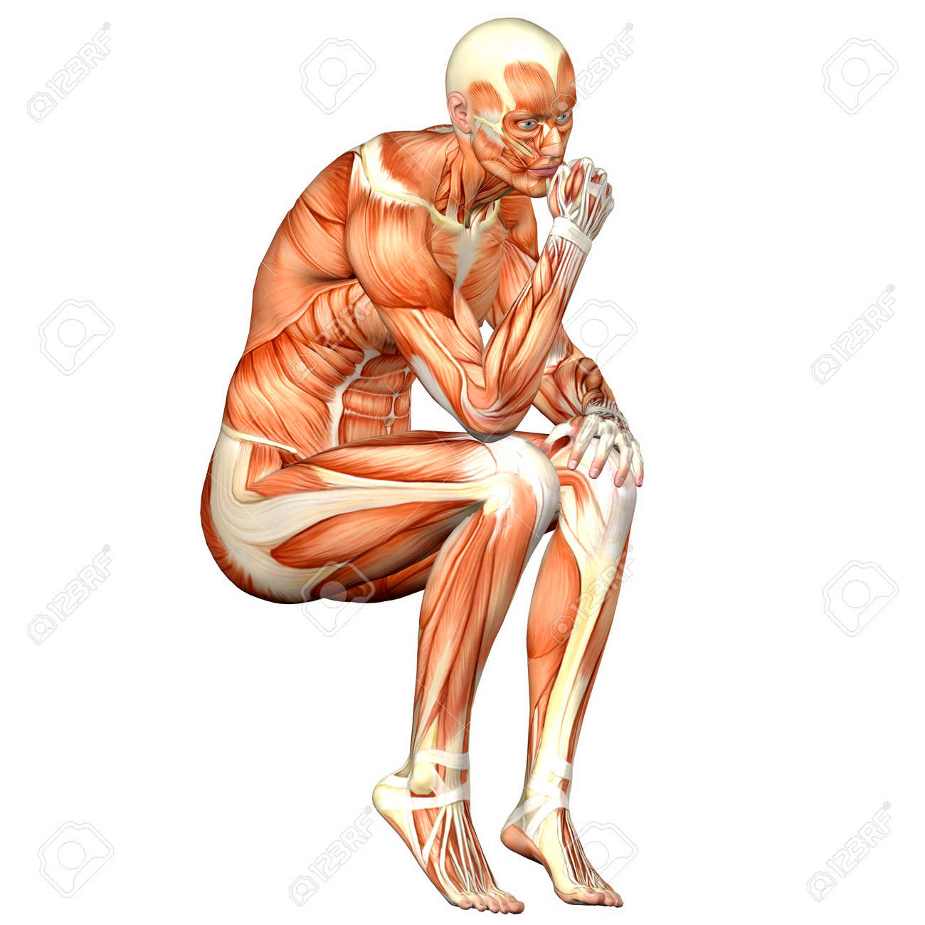 Illustration Of The Anatomy Of The Male Human Body Isolated On