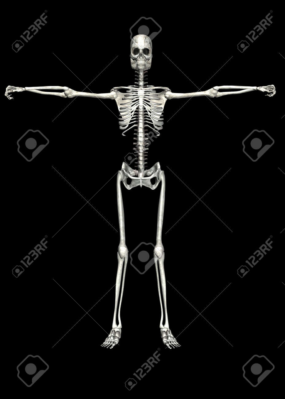 Illustration of a skeleton isolated on a black background Stock Photo - 12743270