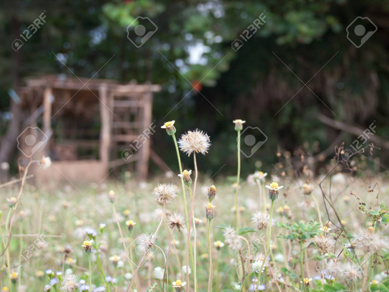 Tropical small grass flowers background Stock Photo - 18129940