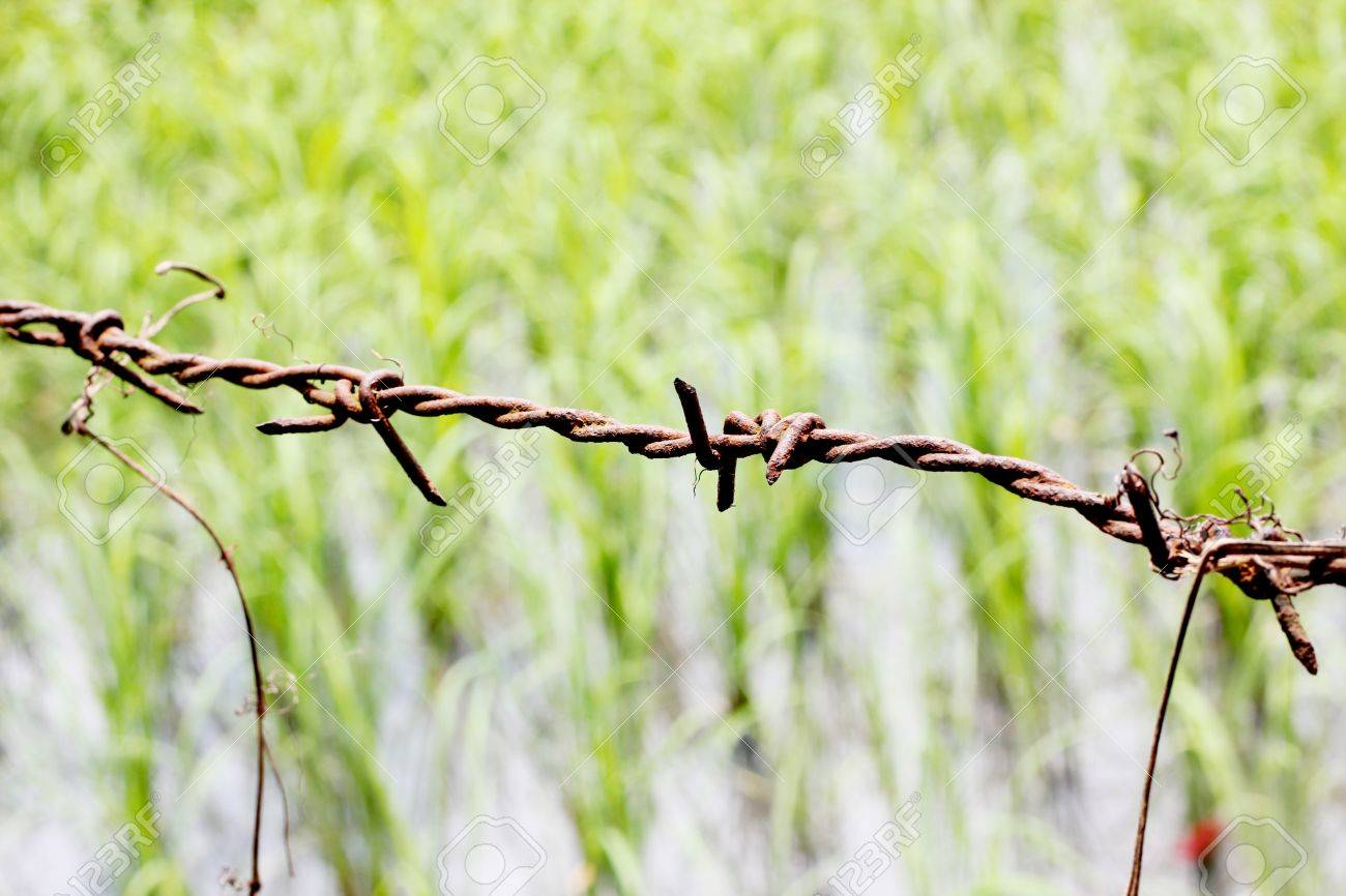 Barbed wire Stock Photo - 14871516